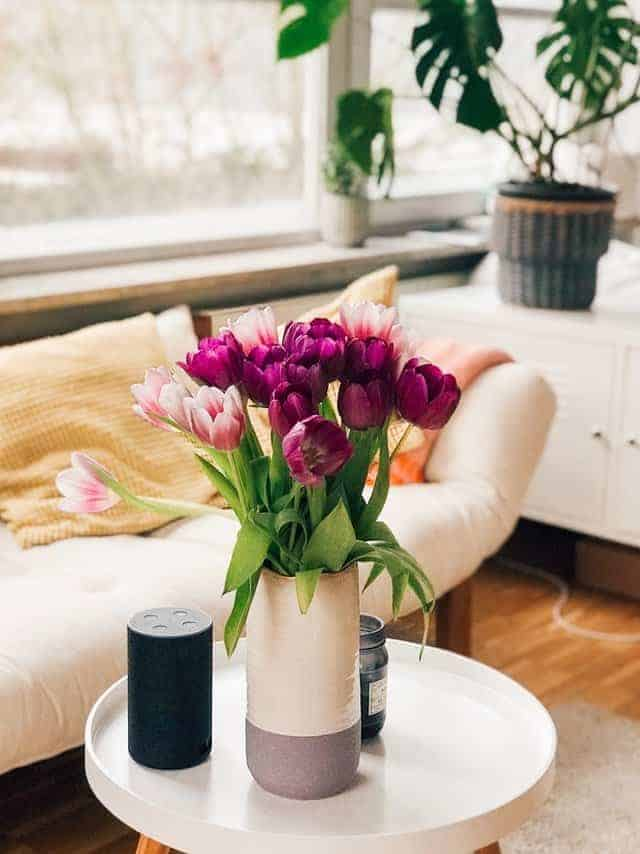 vase of large open purple and pink tulips