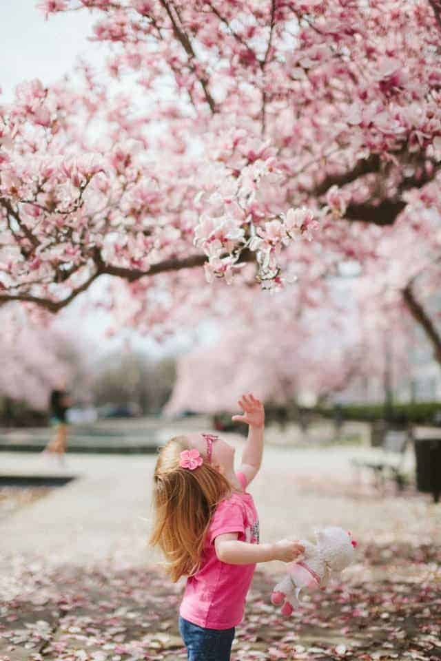 young girl reaching up to cherry blossoms on tree