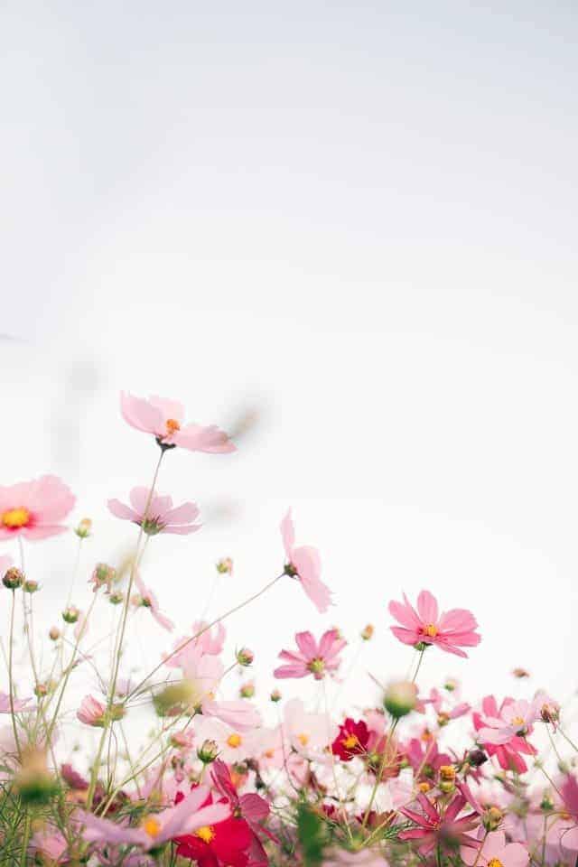 pink spring flowers against sky